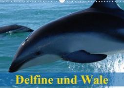 Cover-Bild zu Stanzer, Elisabeth: Delfine und Wale (Wandkalender 2021 DIN A3 quer)