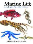 Cover-Bild zu Wright, Michael: Marine Life