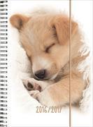 Cover-Bild zu Animals daily A6 Sleeping Puppy 2016/2017