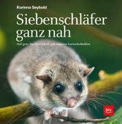 Cover-Bild zu Siebenschläfer ganz nah von Seybold, Korinna