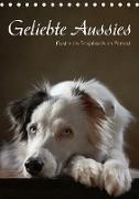 Cover-Bild zu Behr, Jana: Geliebte Aussies - Australian Shepherds im Portrait (Tischkalender 2021 DIN A5 hoch)