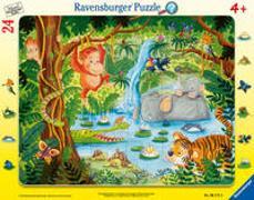 Cover-Bild zu Kraushaar, Sabine (Illustr.): Dschungelbewohner
