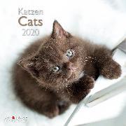 Cover-Bild zu Cats 2020 Int.