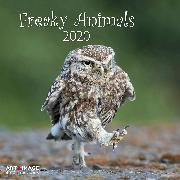 Cover-Bild zu Freaky Animals 2020 Int.