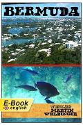 Cover-Bild zu Bermuda (English Edition) (eBook) von Velbinger, Marting
