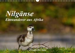 Cover-Bild zu Di Chito, Ursula: Nilgänse - Einwanderer aus Afrika (Wandkalender 2021 DIN A3 quer)