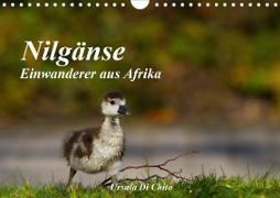 Cover-Bild zu Di Chito, Ursula: Nilgänse - Einwanderer aus Afrika (Wandkalender 2021 DIN A4 quer)
