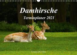 Cover-Bild zu Di Chito, Ursula: Damhirsche (Wandkalender 2021 DIN A3 quer)