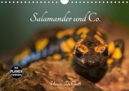 Cover-Bild zu Di Chito, Ursula: Salamander und Co. (Wandkalender 2020 DIN A4 quer)