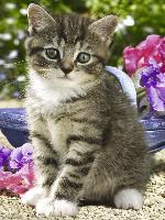Cover-Bild zu Kätzchen im Garten