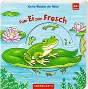 Cover-Bild zu Kleine Wunder der Natur: Vom Ei zum Frosch von Brauer, Sybille (Illustr.)