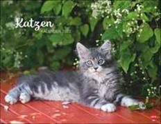 Cover-Bild zu Wegler, Monika: Wegler Katzenkalender 2022