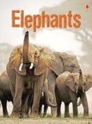 Cover-Bild zu Elephants von Maclaine, James