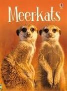 Cover-Bild zu Meerkats von Maclaine, James