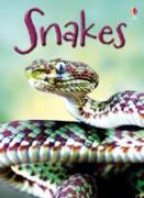 Cover-Bild zu Snakes von Maclaine, James