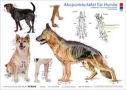 Cover-Bild zu Tierakupunktur Akupunkturtafel für Hunde von Krokowski, Carola