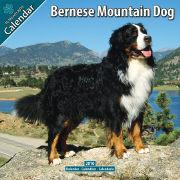 Cover-Bild zu Bernese Mountain Dog / Berner Sennenhund 2010