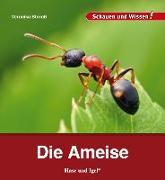 Cover-Bild zu Die Ameise von Straaß, Veronika