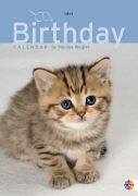 Cover-Bild zu Katzenkinder Geburtstagskalender