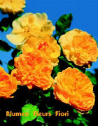 Cover-Bild zu Geburtstagskalender Blumen