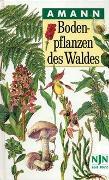 Cover-Bild zu Amann, Gottfried: Bodenpflanzen des Waldes