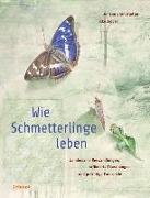 Cover-Bild zu Wie Schmetterlinge leben von Brandstetter, Johann