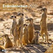 Cover-Bild zu Erdmännchen 2020