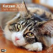 Cover-Bild zu Katzen 2020