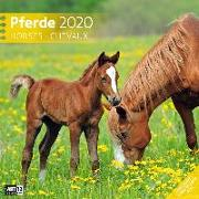 Cover-Bild zu Pferde 2020