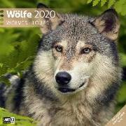Cover-Bild zu Wölfe 2020