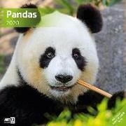 Cover-Bild zu Pandas 2020
