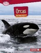 Cover-Bild zu ORCAS ON THE HUNT von Klepeis, Alicia Z.