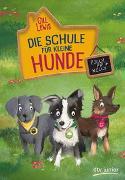 Cover-Bild zu Lewis, Gill: Die Schule für kleine Hunde - Polly, Pip und Nelly