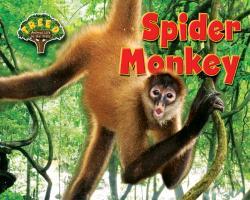 Cover-Bild zu Phillips, Dee: Spider Monkey
