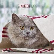 Cover-Bild zu Katzen 2022 - Broschürenkalender 30x30 cm (30x60 geöffnet) - Kalender mit Platz für Notizen - Alpha Edition - Cats - Bildkalender - Wandplaner von ALPHA EDITION (Hrsg.)