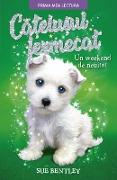 Cover-Bild zu Bentley, Sue: Ca¿elu¿ul Fermecat (eBook)