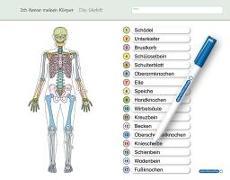 Cover-Bild zu Ich kenne meinen Körper - Das Skelett von Langhans, Katrin
