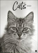 Cover-Bild zu Wegler, Monika: Wegler Cats Edition Kalender 2022