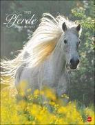 Cover-Bild zu Stuewer, Sabine: Pferde Classics Kalender 2022