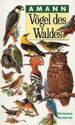Cover-Bild zu Vögel des Waldes von Amann, Gottfried
