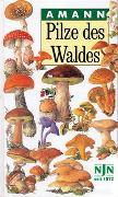 Cover-Bild zu Pilze des Waldes von Amann, Gottfried