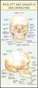 Cover-Bild zu Skelett und Muskeln des Menschen von Dancová, Barbora