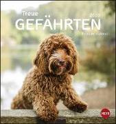 Cover-Bild zu Hunde Postkartenkalender - Treue Gefährten Kalender 2020