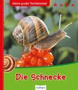Cover-Bild zu Meine große Tierbibliothek: Die Schnecke von Starosta, Paul
