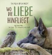 Cover-Bild zu Wo die Liebe hinfliegt von Brandt, Tanja