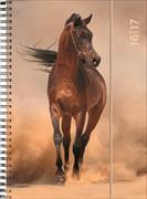 Cover-Bild zu Animals weekly A5 Horse 2016/2017