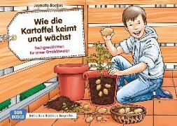 Cover-Bild zu Wie die Kartoffel keimt und wächst von Boetius, Jeanette