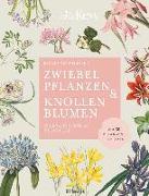 Cover-Bild zu Zwiebelpflanzen & Knollenblumen von Wilford, Richard