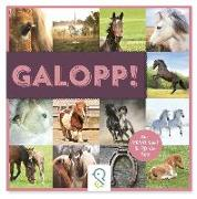 Cover-Bild zu Galopp! von Kastenhuber, Bobby (Hrsg.)