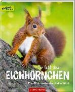 Cover-Bild zu So lebt das Eichhörnchen von Noa, Sandra